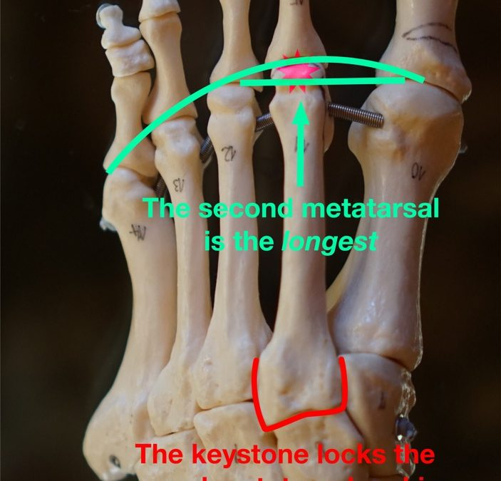 Pain in the Ball of Your Foot? Everything You Wanted to Know About Second MTP Synovitis